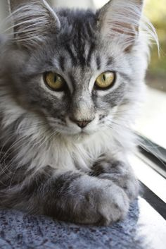Most Beautiful Cat | Keep in mind that if you're thinking of a purebred it will cost you ...