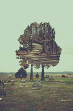 Eerie Double Exposure by Moth Owl Photography on Creative Market