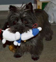 Col. Potter Cairn Rescue Network Post Adoption Blog: A Dandy Christmas!