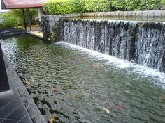 raised koi pond - Google Search