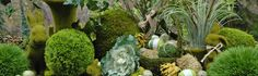 Thinking about how to decorate for Spring?  Moss is BIG....and we have it all at Save-On-Crafts!  Check it out!