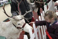 Reindeer so cute