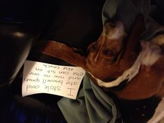 """""""I stole and ate brussel sprouts and now no one else can sit on the sofa.""""  ~ Dog shaming shame - Bassett"""