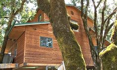 Largest Treehouse in the World by Michael Garnier | HomeDSGN