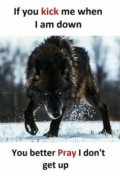 If you kick me while I'm down then don't expect to part of my pack when I get back up