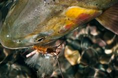 Fly Fishing Fish -- Check these fishing tips - see what colors are best to wear fishing, if you want to catch fish. See http://www.thecampingzone.com/at3i