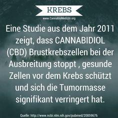 Es gibt viele Studien zum Thema Cannabis und Krebs. Heute eine Studie über Brustkrebs. CBD (Cannabidiol) ist nicht psychoaktiv, frei verkäuflich und wirkt laut Studien gegen viele Krebsarten.  Auszug Studie: http://www.ncbi.nlm.nih.gov/pubmed/20859676  Komplette Studie: http://www.ncbi.nlm.nih.gov/pmc/articles/PMC3410650/