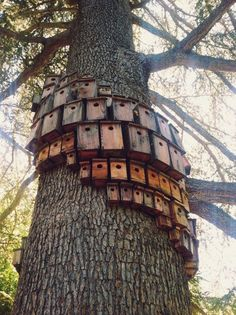 Wish I had a tree big enough for this, beautiful cluster of bird houses