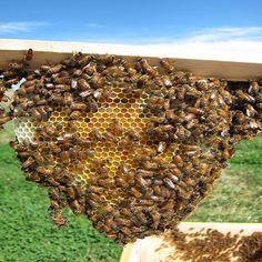 A Better Sugar Syrup Recipe for Feeding Bees - Homesteading and Livestock - MOTHER EARTH NEWS. Also great tips on figuring out when or if you should feed them.