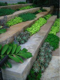 Jardineiras em degraus com suculentas