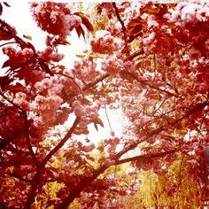 Spring time wonderful