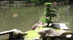 méditation guidée - ancrage a la terre - méditation de l'arbre