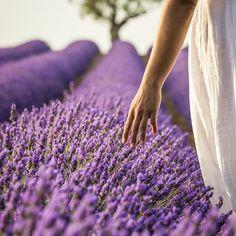 "2,337 Likes, 79 Comments - Francesco Vaninetti (@francesco_vaninetti_photo) on Instagram: ""Provence"""