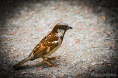 """""""Small Brown"""", pequeño pájaro que gozaba de una libertad, que el resto de los animales que lo rodeaban no tenían."""