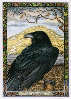 Crows Ravens:  #Crow.