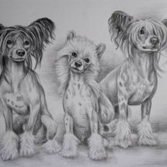 Chinese Crested sketch....wide variety at cafepress.com. Crested Love