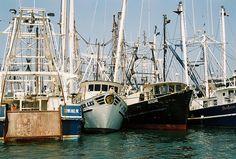 cape may nj | Cape May, NJ Fishing Boats | Flickr - Photo Sharing!