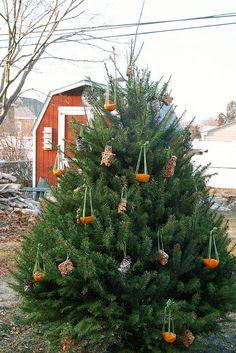 Edible tree ornaments for birds.