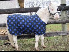Windy Acres Miniature Horse Blankets - Horse Blankets
