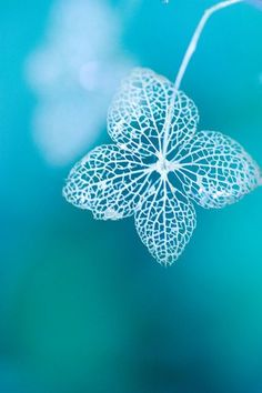 Macro photography allows you discover such beautiful detail you might never have noticed otherwise. Even decay can be beautiful. Shades Of Turquoise, Shades Of Blue, 50 Shades, Tiffany Blue, Fotografia Macro, No Rain, Macro Photography, Belle Photo, My Favorite Color