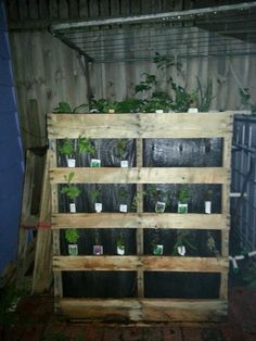 Vertical garden cladding for aquaponics out of reclaimed pallet