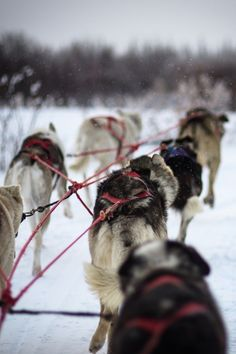 0rient-express:  Dog Sled | by Barron Snyder | Website.