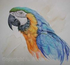 Blue and Yellow Macaw - Parrot Painting by Ria Winters Parrot Drawing, Parrot Painting, Watercolor Bird, Watercolor Animals, Watercolor Paintings, Bird Drawings, Animal Drawings, Water Lilies Painting, Color Pencil Sketch