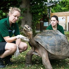 Galapagos tortoises like to have their necks scratched.   We Went Behind The Scenes At London Zoo And Learned So Much