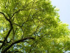 Tree Ninja Getting Out, Ninja, Clouds, Abstract, Artwork, Kids, Outdoor, Art Work, Children