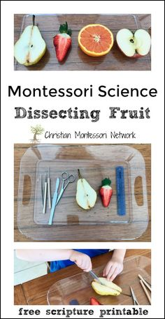This Montessori Science Dissecting Fruit lesson identifies the various structures of the fruit, compares fruit seeds, matching work, and a spiritual lesson. Montessori Science, Montessori Classroom, Montessori Toddler, Preschool Science, Fruit And Veg, Fruits And Veggies, Vegetables, Nutrition Resources, Nutrition Tips