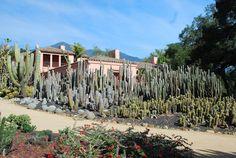 Lotusland garden in Santa Barbara. Cacti And Succulents, Cacti Garden, Succulent Planters, Hanging Planters, Cactus Plants, Spanish Landscaping, Spring Architecture, Balcony Flowers, California Garden