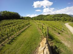 exploring Collio hills #wineyards #italy #fvg #gopro #nature #wine #food #followme
