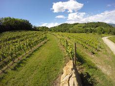exploring Collio hills #wineyards #italy #fvg #gopro #nature #wine #food #followme
