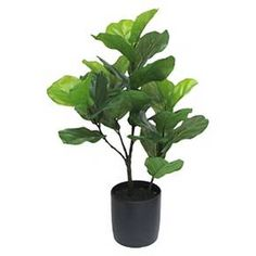 Artificial Fiddle Leaf Fig Tree in Black Pot Tall - Threshold™ : Target