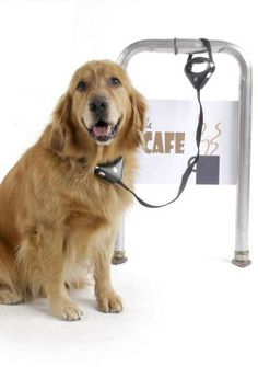 Protect your dog when you make a quick stop at a coffee shop or the post office with the Safespot Locking Leash.