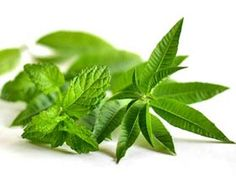 Best Herbal Tea for #BackPain Relief – 7 Herbs to Try!