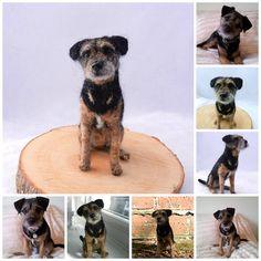 needle felted Border Terrier 'Eddie' | Flickr - Photo Sharing!