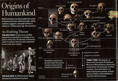 Modern humans are descended from a line of bipedal primates which emerged in Africa 5 to 7 million years ago. Though our direct relations are very hotly contended. Evolution Science, Human Evolution, Earth Science, Science And Nature, Biological Anthropology, Charles Darwin, World History, Genetics, Natural History