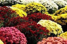 Какво знаем за историята на цветята #цвете  #растение  #tzvete #cvete