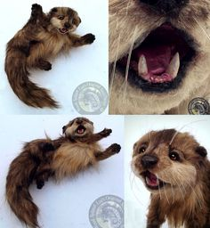 Hand Made Poseable Realistic Otter! by Wood-Splitter-Lee