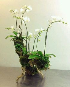 orchids and ermine 1927 Orchid Flower Arrangements, Orchid Planters, Orchid Pot, Orchids Garden, Orchid Terrarium, Garden Plants, Air Plants, Indoor Plants, Flowering Plants