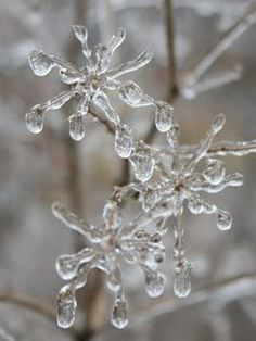 ice-covered twigs