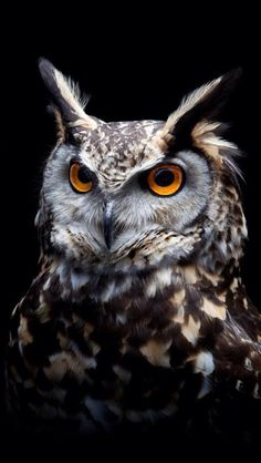 √ 11 Types of Eagles in The World With Awesome Pictures Famous Types of Eagles in The World With Awesome Pictures Tier Wallpaper, Owl Wallpaper, Animal Wallpaper, Dark Wallpaper, Wallpaper Wallpapers, Owl Photos, Owl Pictures, Birds Photos, Beautiful Owl