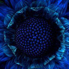 "Seen by KIXX. Gloves ""To protect and Impress"" www.facebook.com/... #garden #gloves #tuinhandschoenen"