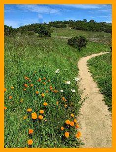 39 Best California Wildflowers Images California Wildflowers