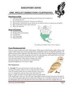 Here's a nice set of notes for teachers on owls and owl pellets. Mad Science, Science Biology, Teaching Science, Life Science, Science Experiments, Fourth Grade Science, Middle School Science, Owl Pellets, Food Chains