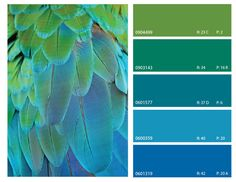 Color Combinations With Blue top-3-march-2013 | colors | pinterest | peacock color scheme