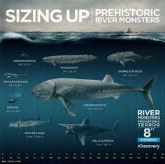 Sizing up prehistoric river monsters (fish). Prehistoric Wildlife, Prehistoric World, Prehistoric Creatures, River Monsters, Sea Monsters, Dinosaur Art, Dinosaur Fossils, Jurassic World Park, Les Reptiles