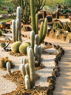 Cactus garden using rocks and gravel - Compost Rules. Cactus garden using rocks and gravel - Compost Rules. Succulent Landscaping, Landscaping With Rocks, Backyard Landscaping, Landscaping Ideas, Hydrangea Landscaping, Landscaping Edging, Modern Landscaping, Cacti And Succulents, Planting Succulents
