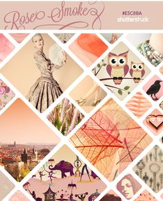 Shutterstock Curates Pantone's Rose Smoke
